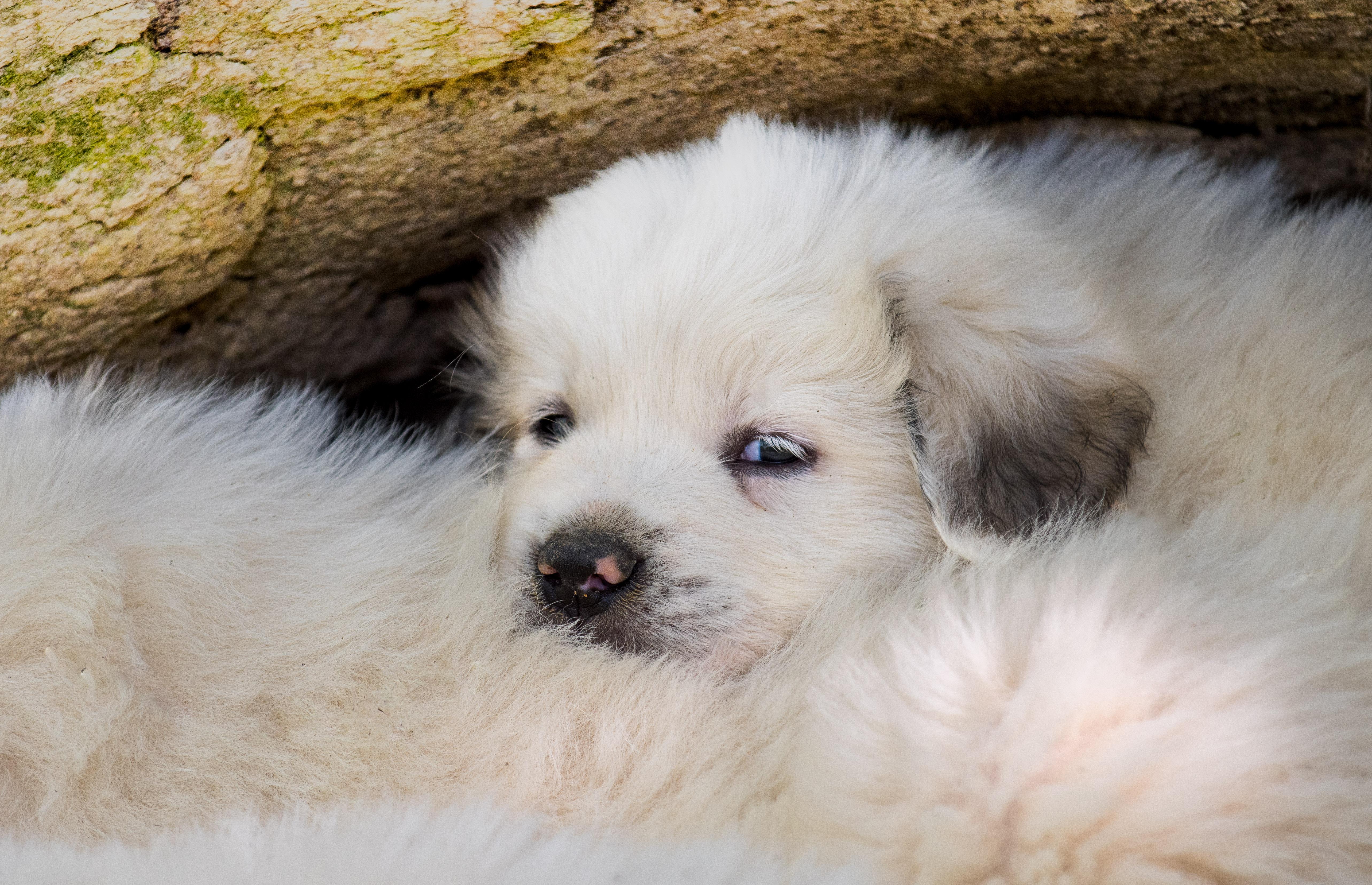 Puppy 17-3345