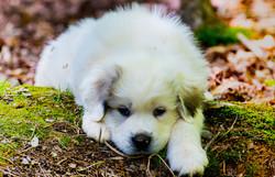 Puppy 3-3529