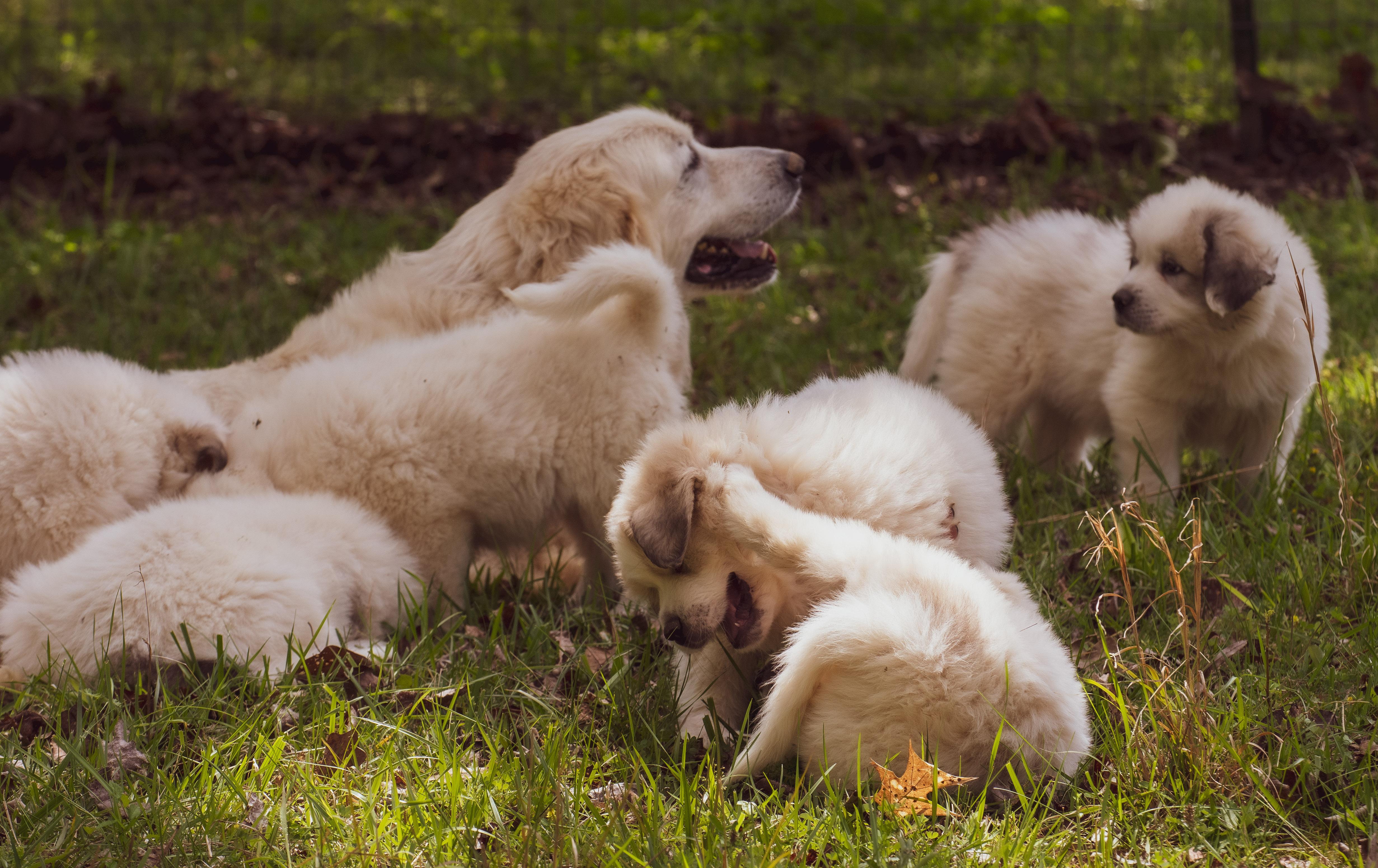 Puppy 8-3625