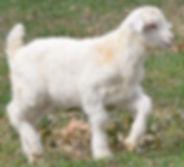 Windy - White Buck.jpg