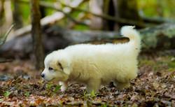 Puppy 6-3230