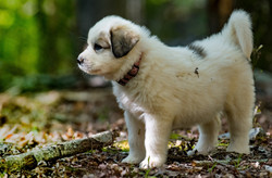 Puppy 3-3211