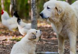 Puppy 25-3426