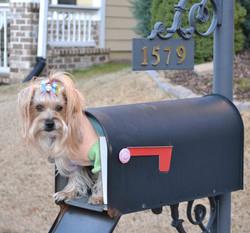 Lane - Mailbox(1).JPG