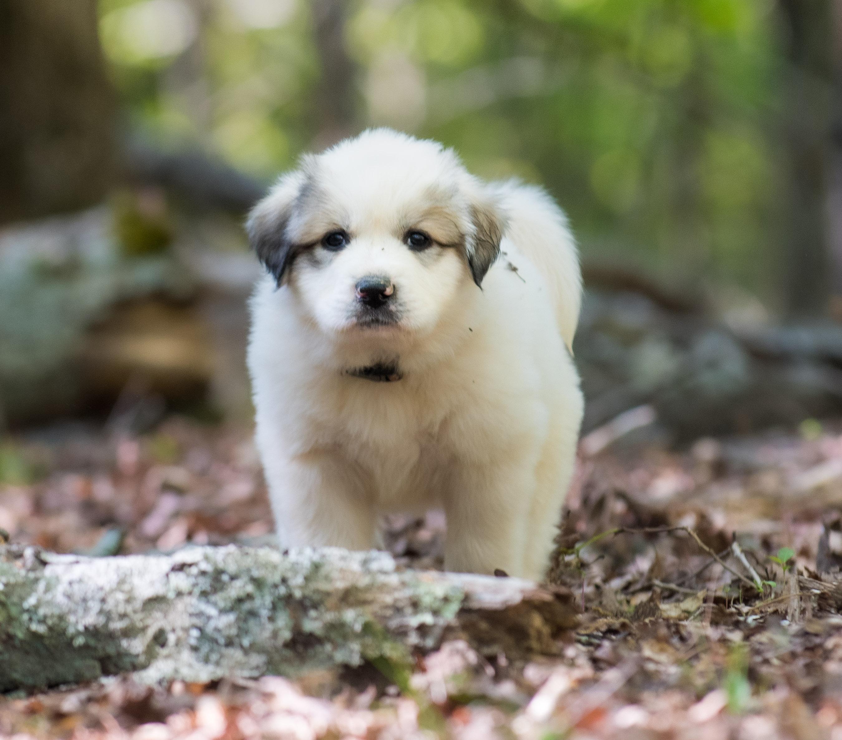 Puppy 2-3208