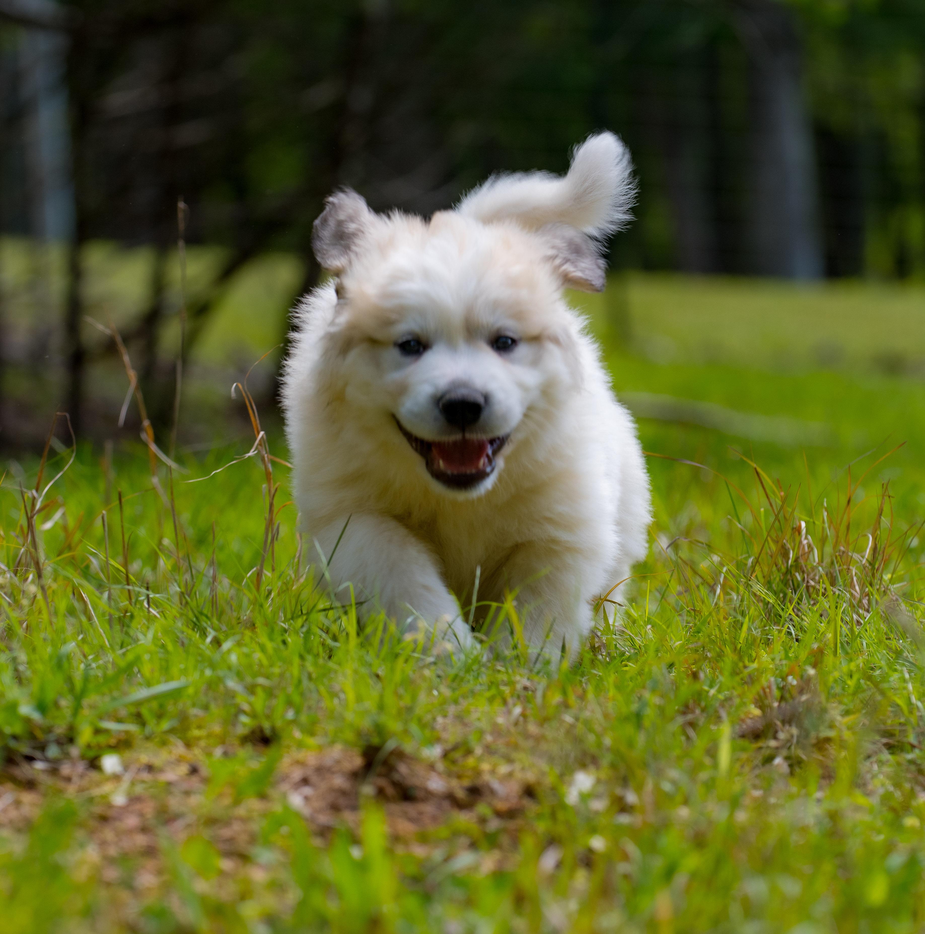 Puppy 9-3637