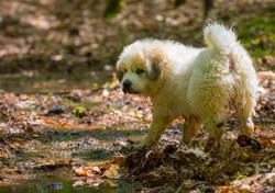 Puppy 21-3704