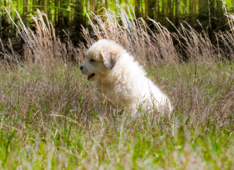 Puppy 28-3767