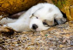 Puppy 14-3313