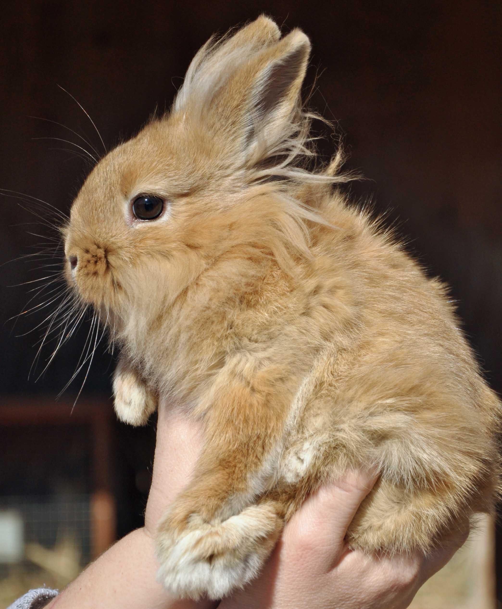 Bunny - Blond.jpg