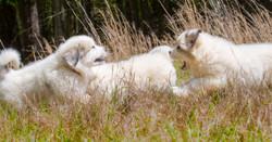 Puppy 30-3773