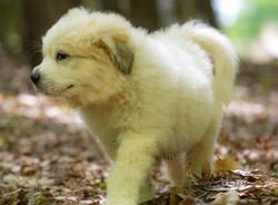 Puppy 31-3783