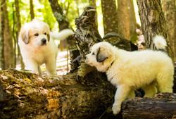 Puppy 2-3493