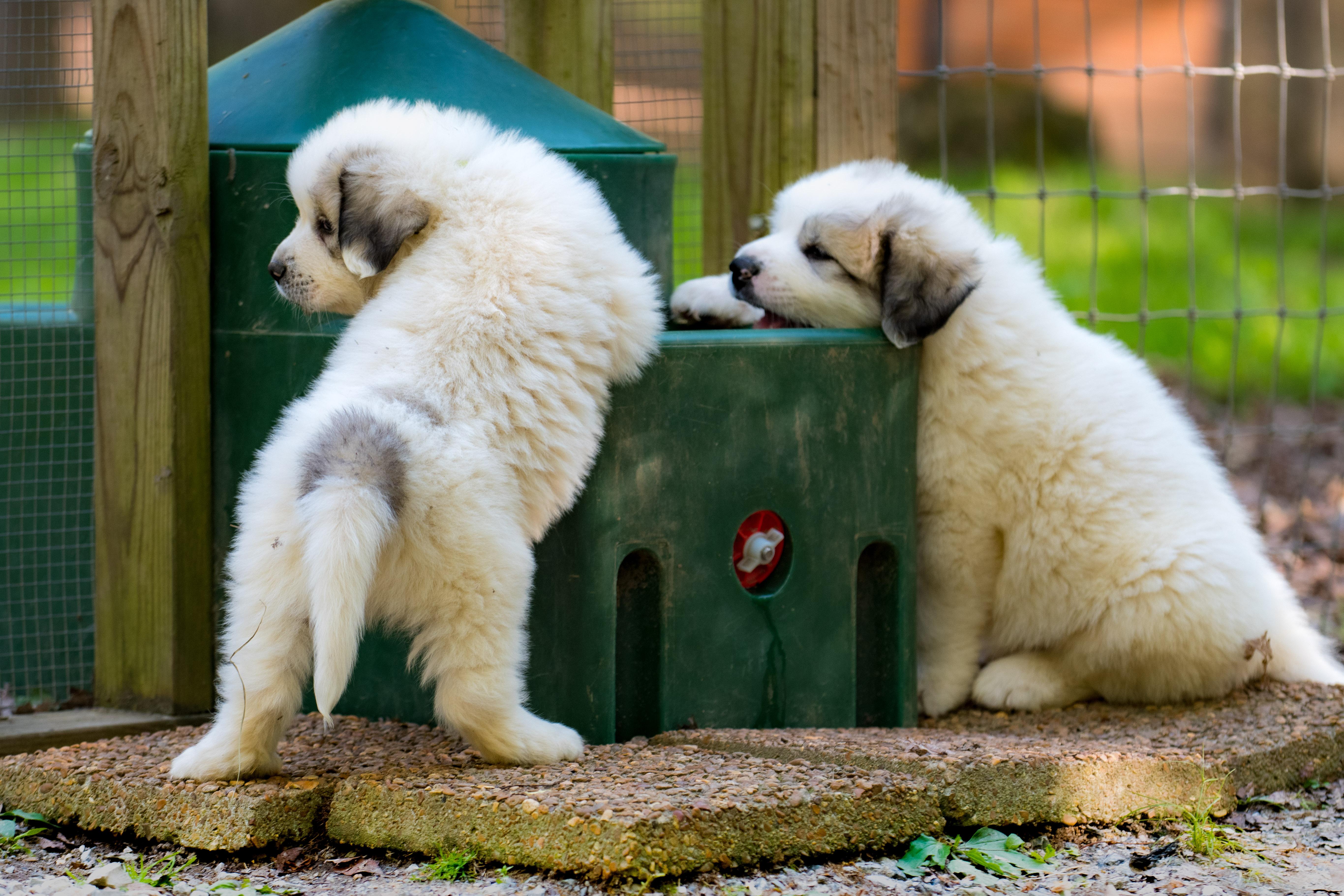Puppy 22-3386
