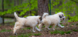 Puppy 34-3795