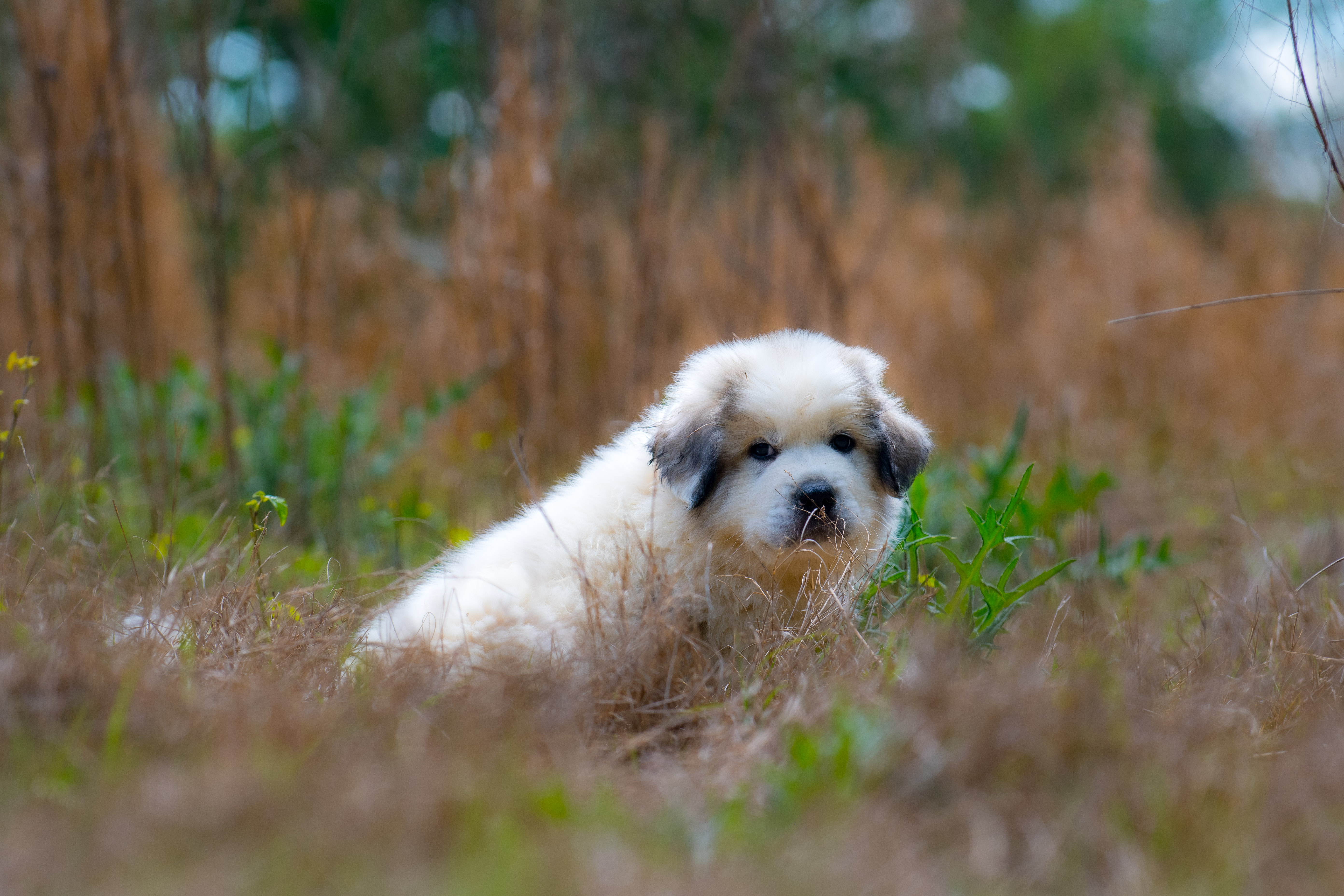 Puppy 26-3751