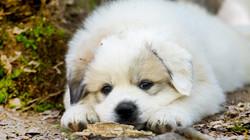 Puppy 12-3292