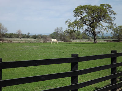 horse retirement Northern California, retired horse boarding, Equus Farms