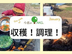 AKGfarm 野菜収穫して調理!