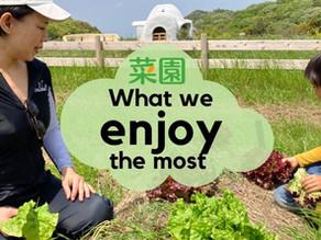 菜園活動の一番の楽しみは?