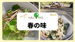摘みたて山菜、おいしいね!