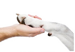 Holding paws with a dog.png