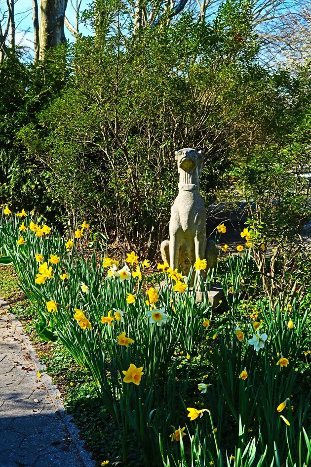 Daffodils6.jpg