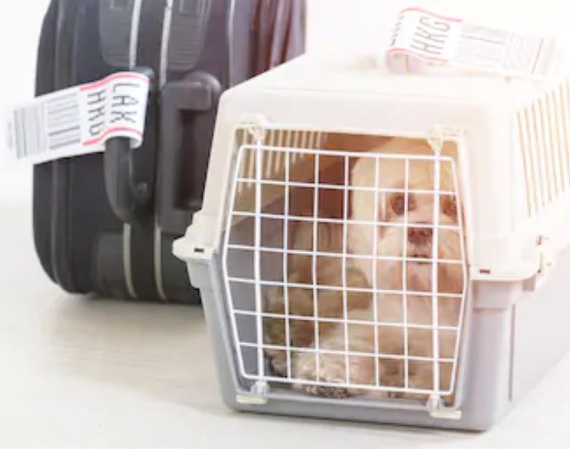 Pet Travel Regulations
