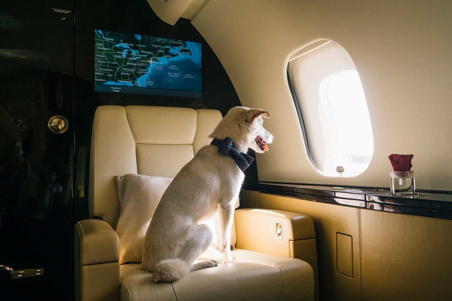 Pet-friendly Private Jet Charter