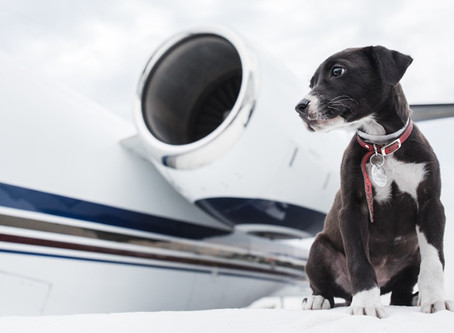 Traveling with Pets by Private Jet Charter