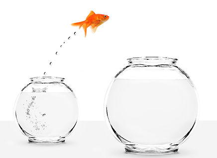 goldfish jumping from small to bigger bo