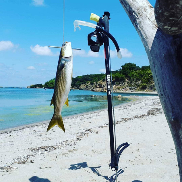 Ropotamo sparefishing