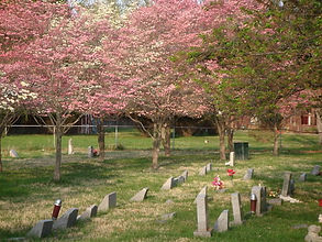 rows of graves w pink trees.jfif