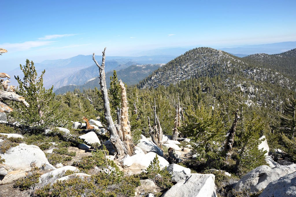 near_the_top_of_mount_san_jacinto__calif