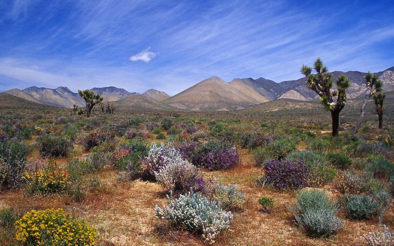 deserts-hills-trees-california-sky-natur