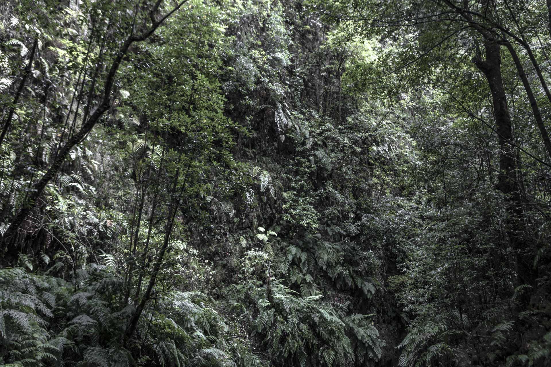 Forest Madeira