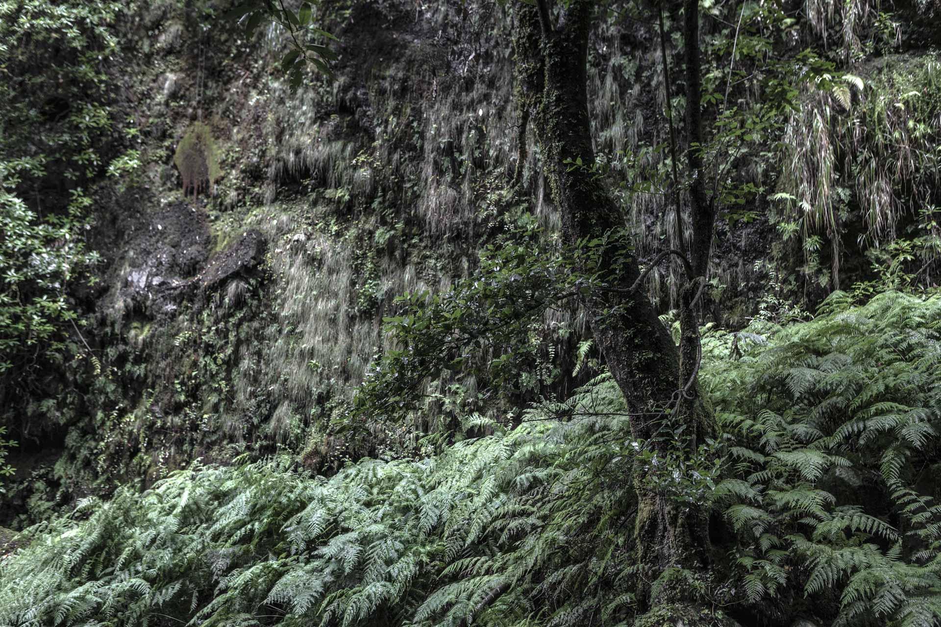 Forest Madeira 2