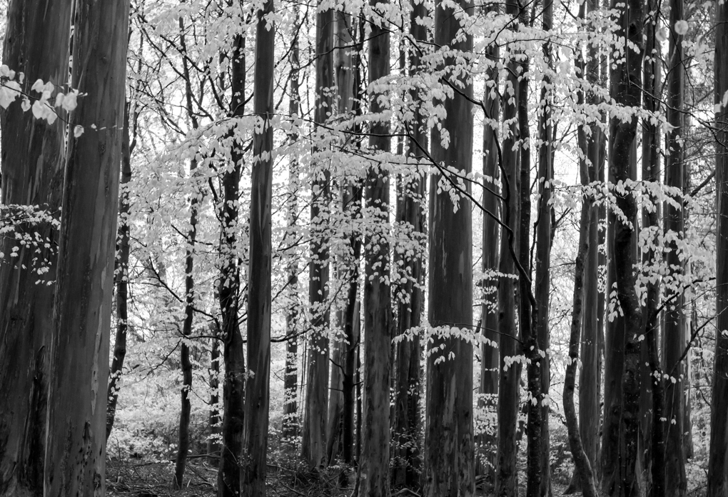 Forest Tasmania