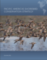 Pacific Americas Shorebird Conservation