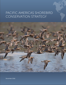 Pacific Americas Shorebird Conservation