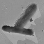 Microbify_Methanobacterium_Desulfomicrob