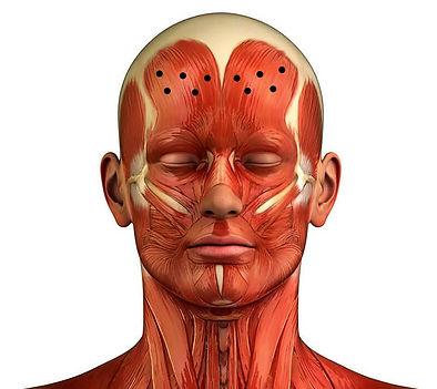 anatomia collo 1jpg_LI (2).jpg