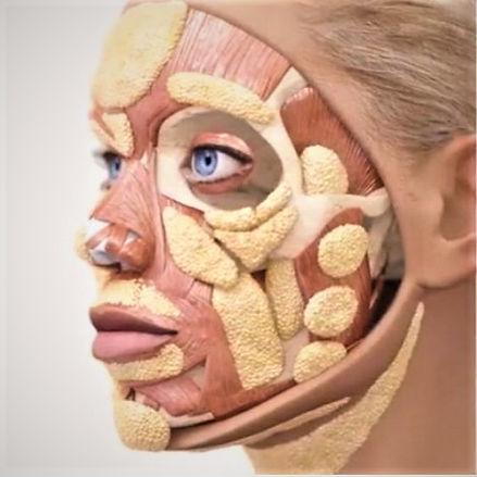 facial fat pads (2).jpg