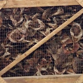 Fish factory visit (Sept.)