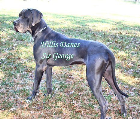 George 14 months 6.jpg