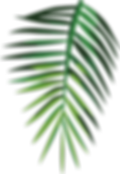 Tropical%20Leaf_edited.png
