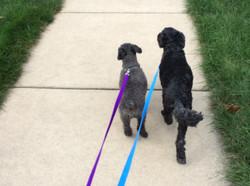 Sparky & Rosie