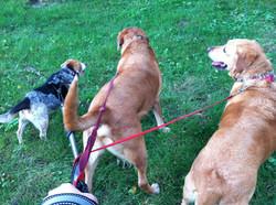Zeley, Riley & Max