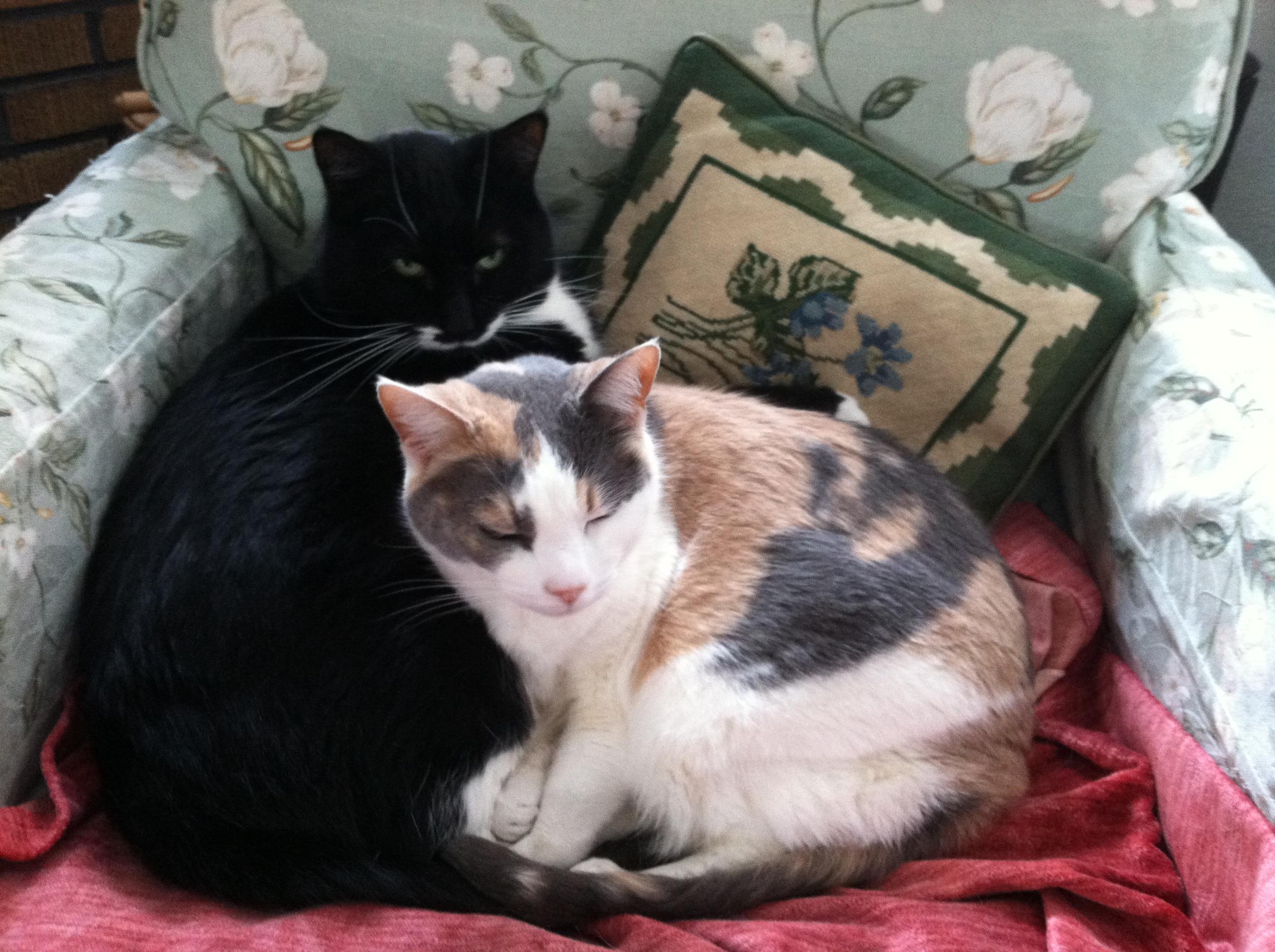 Kiwi & Rosie