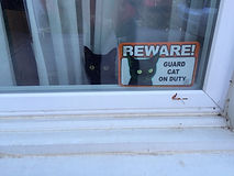 Beware! Guard cat on duty.